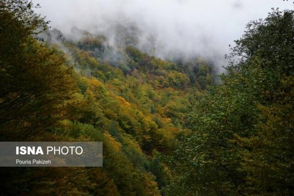 7 نکته درباره جنگل های ایران